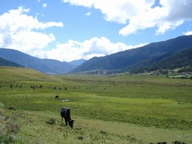 Cranes_in_Bhutan05.jpg