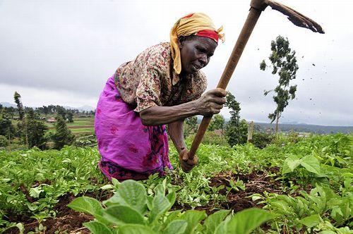 ベーシックインカムが導入されても、人々は働き続ける:ケニアでの研究結果