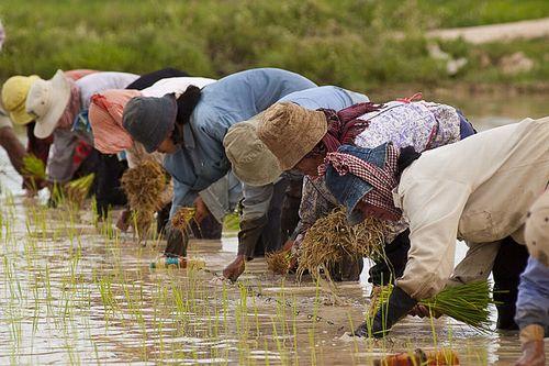 2050年までに100億人に持続可能な食料供給を行う22の方法